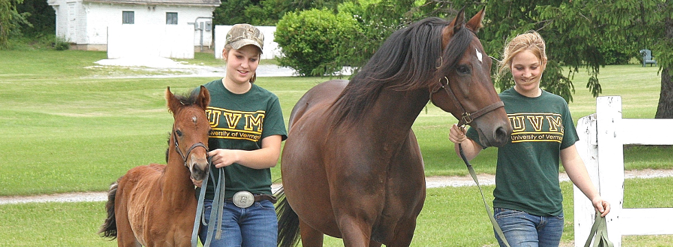 UVM Morgan Horse Farm, Weybridge