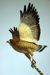 600-Birds-of-Vermont
