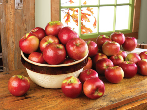 600-Cold-Hollow-Cider-Mill-apples