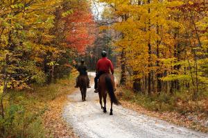 600-Mountain-Top-Inn-horses