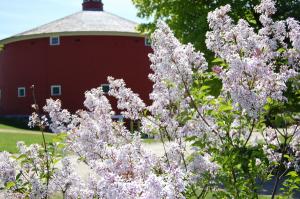 600-Shelburne-Musem-lilacs-round-barn