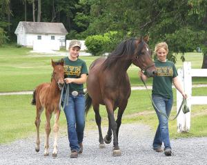 600-UVM-Morgan-Horse-Farm-horses