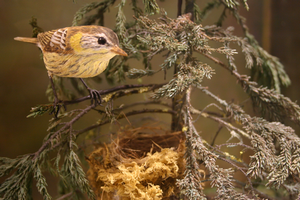 Birds of Vermont Cape May Warbler sculpture