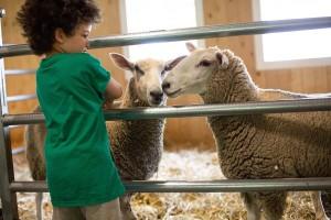 RetreatgalleryFarm_Sheep_MichelleFrehsee